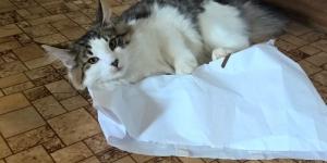 IC Wildfee's Baba-Jaga und Papiertüten
