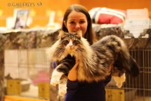 IC HU*GALLIFREY'S Tarragon Internation Cat Show Wien 26.02.2017