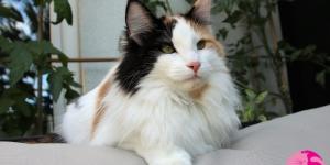 HU*Gallifrey's Octavia Blake (1 Jahr alt)