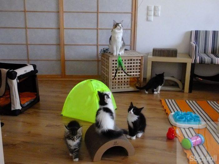 Katzenkindergarten bei Sabine Schroll
