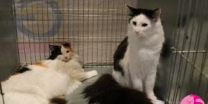 HU*Gallifrey's Octavia Blake und Babinka's Baghira warten auf ihren Richter