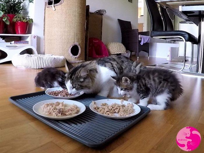 C-Wurf beim Fressen