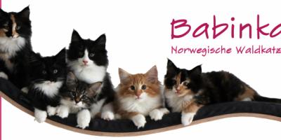 Babinka's Cattery Banner