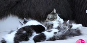 Babinka's Baghira, Babinka's Freya und ihr H-Wurf